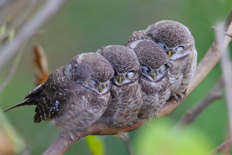 нашей птичий сон фото пишет